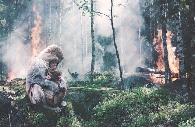 Ancaman Kebakaran Hutan dan Lahan di Musim Kemarau