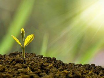 manfaat menanam pohon dalam mengatasi global climate